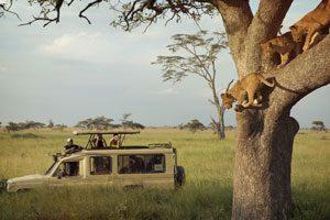 g-adventures-serengeti