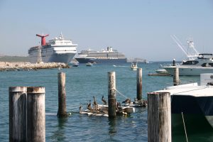 ACV Offers Wave Season Cruise Deals