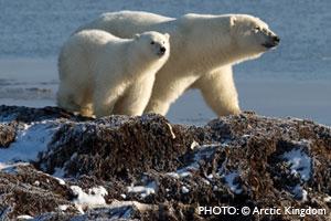 Crystal, Arctic Expeditions Set Sail
