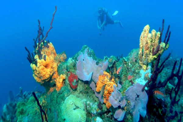 Rediscover Diving In Dominica