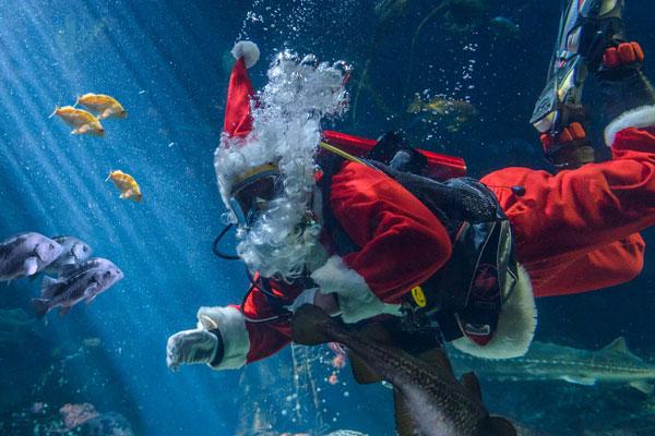 Scuba Claus Greeting Guests at Vancouver Aquarium