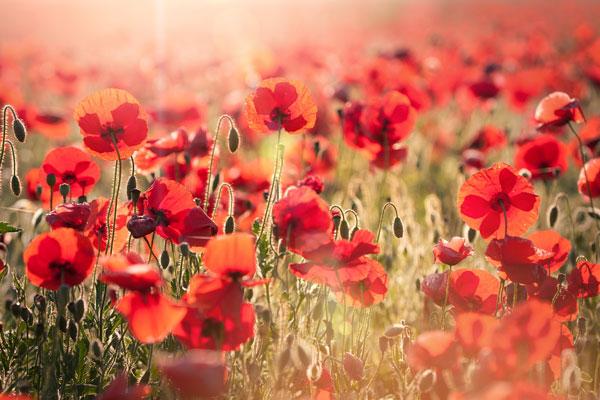 Trafalgar Commemorates the 75th Anniversary of D-Day