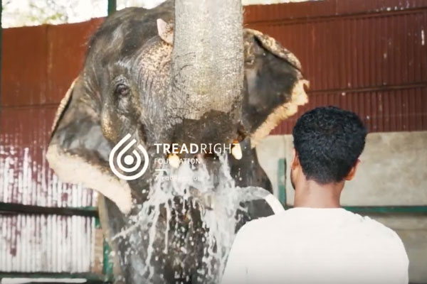 TreadRight Unveils Wildlife SOS, India Video