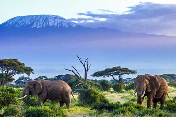Goway Offers East Africa Safari Savings