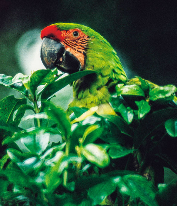 Nature is always nearby in Costa Rica