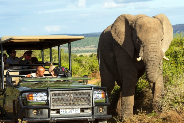 SAA Signs Up To Protect Wildlife