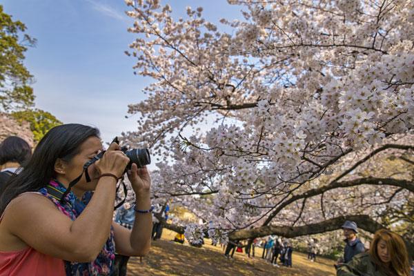 Japan: Discovering The Ultimate Wonderland Safely