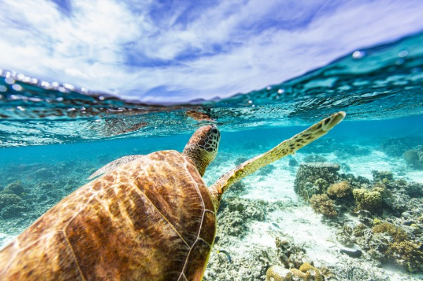 Sandals Celebrates World Oceans Day